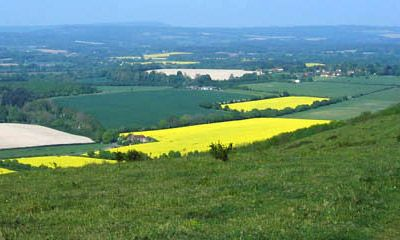South Downs Way yellow fields